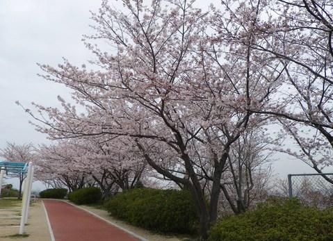 高塔山公園へGO!_e0198627_14434730.jpg