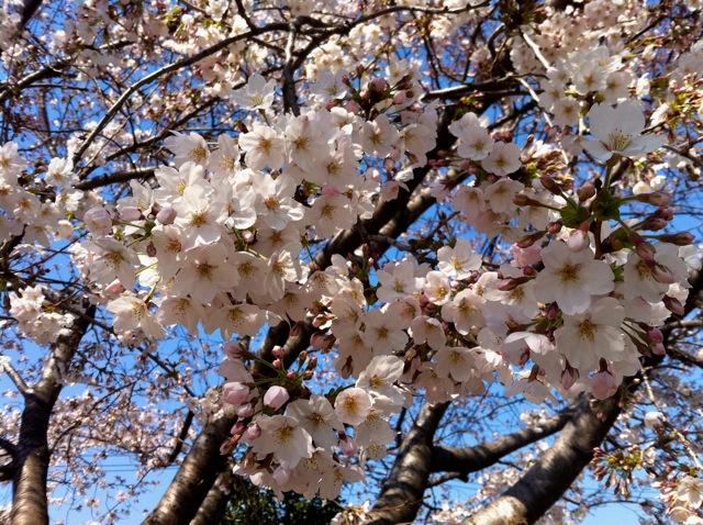 春が来た!_d0075828_18503017.jpg
