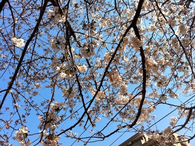 春が来た!_d0075828_18504676.jpg