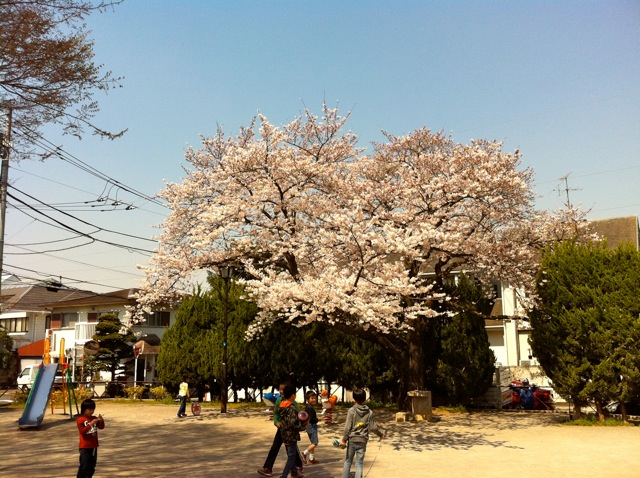 春が来た!_d0075828_18515249.jpg
