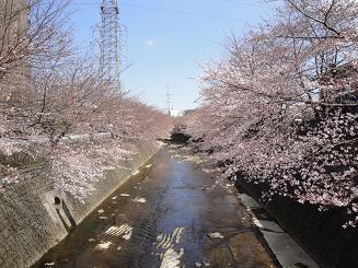 今年も桜デート_e0170128_22452566.jpg