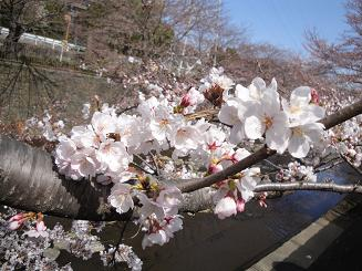 今年も桜デート_e0170128_22455232.jpg