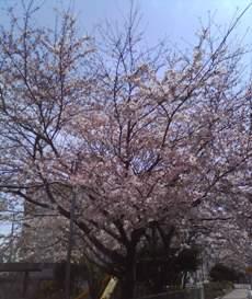 自宅近くの公園で。_b0047333_16262954.jpg