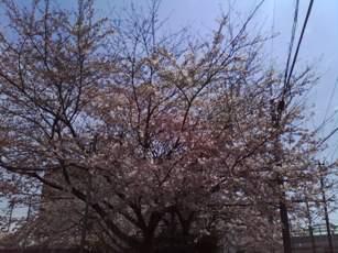 自宅近くの公園で。_b0047333_16264180.jpg