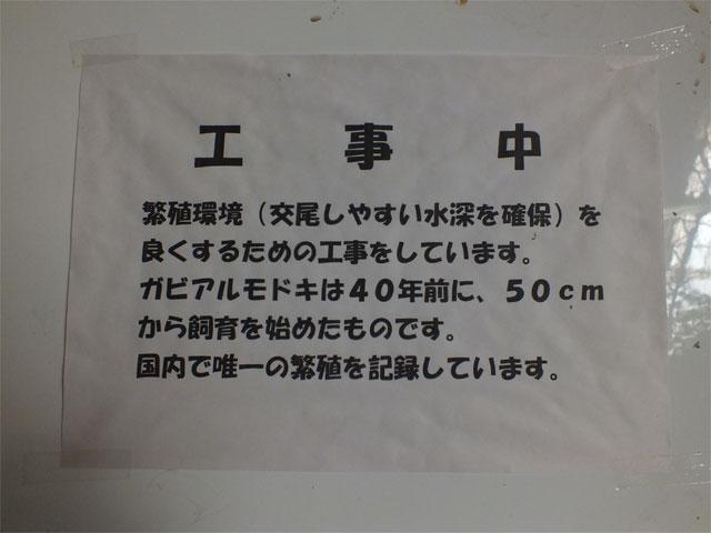 ワニ池、再び_a0179837_2258684.jpg