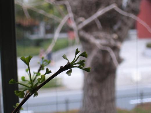 蕾から新芽。_b0190342_1112149.jpg