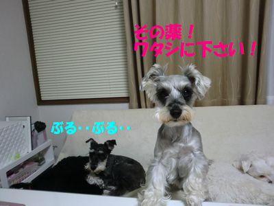 b0206444_20102526.jpg