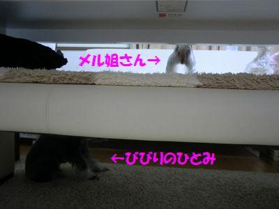 b0206444_2011418.jpg