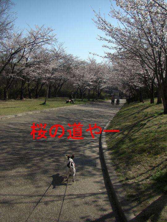 f0053952_20532973.jpg