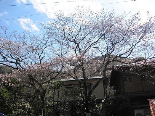 2010年4月7日 桜実況中継_c0078659_14463036.jpg
