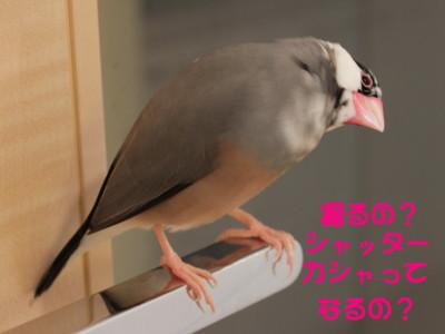 b0158061_21313025.jpg