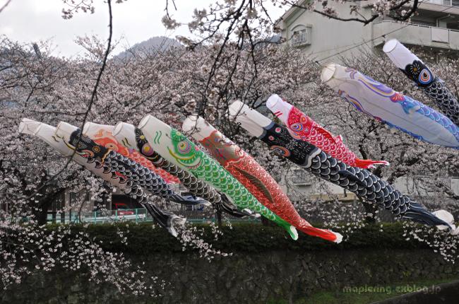 桜_f0234062_2138463.jpg