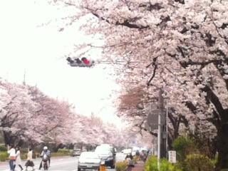桜並木_f0182167_17421528.jpg