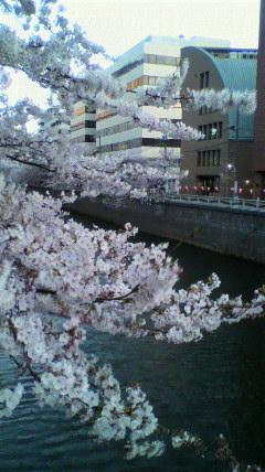 目黒川の風景_a0098079_22342994.jpg