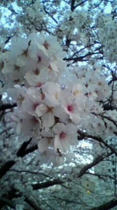 きれいに咲いてくれています(^-^)_a0098079_22351665.jpg