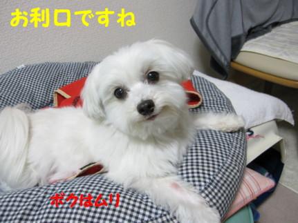 b0193480_11313213.jpg