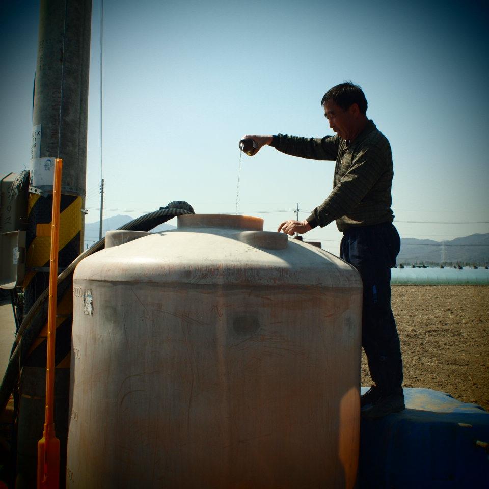 韓国のスイカ農家で_b0201492_1643979.jpg