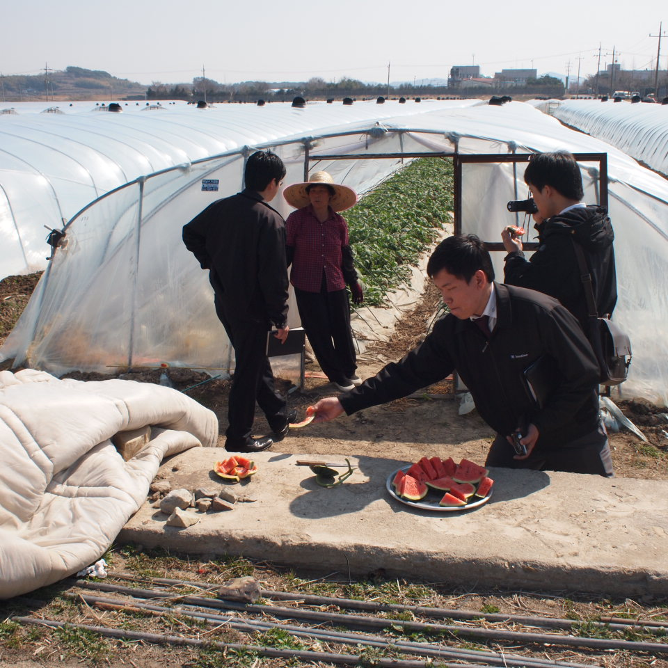 韓国のスイカ農家で_b0201492_1656644.jpg