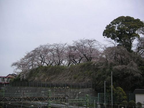 幸ヶ谷公園の桜_e0017093_1627469.jpg