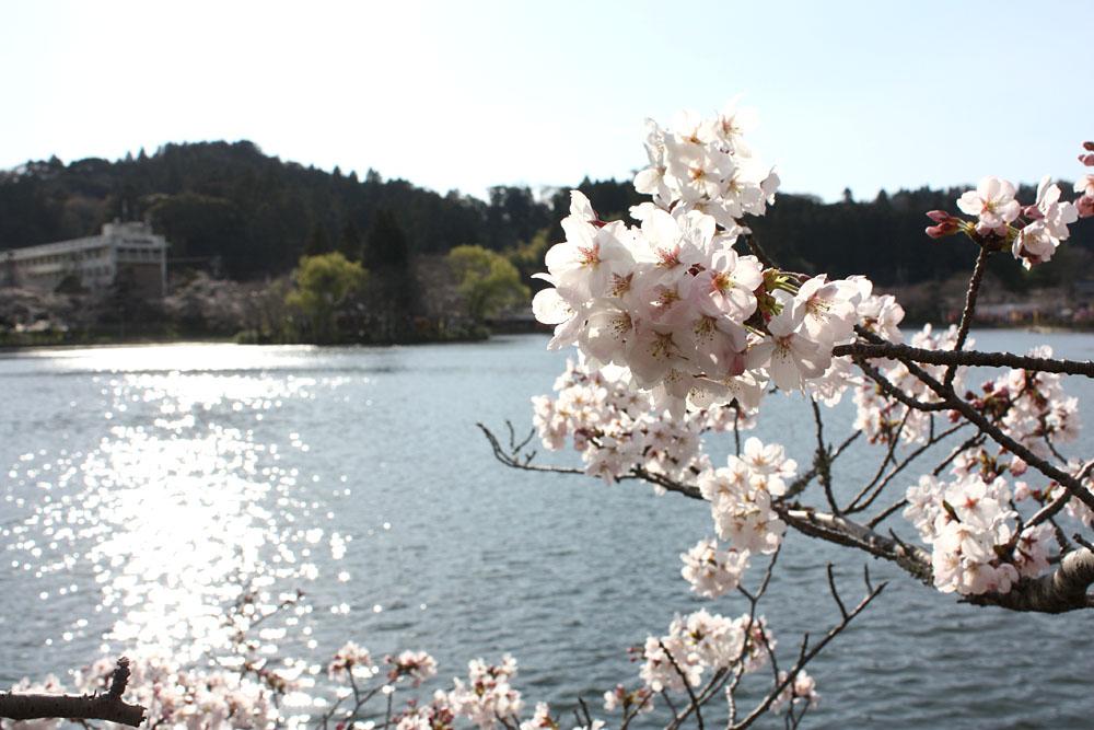 徳川家康も訪れた東金・八鶴湖 春らんまん_b0114798_21295931.jpg