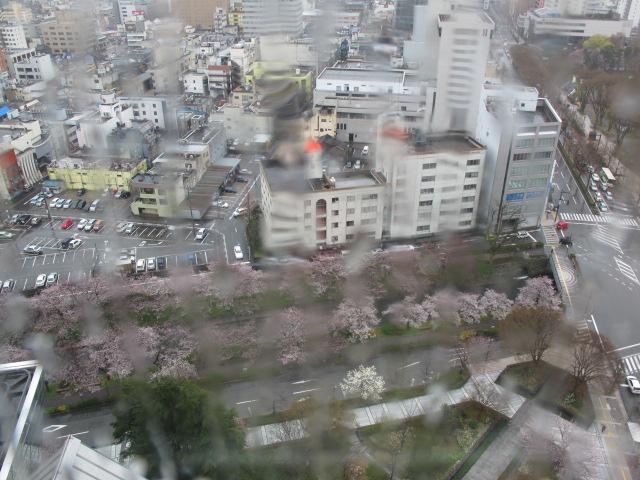 サクラ開花宣言!_d0182409_2248122.jpg