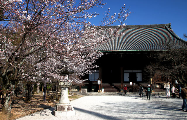 京の花だより 真如堂から・・・_e0048413_20513190.jpg