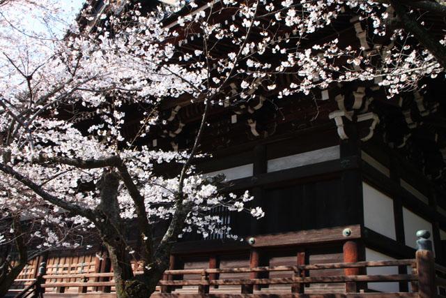 京の花だより 真如堂から・・・_e0048413_20515715.jpg
