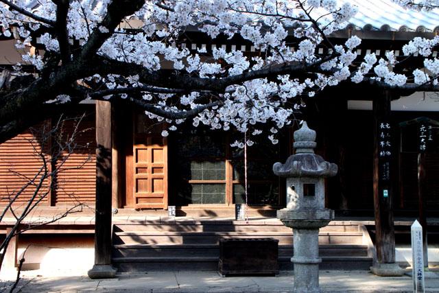 京の花だより 真如堂から・・・_e0048413_20521111.jpg