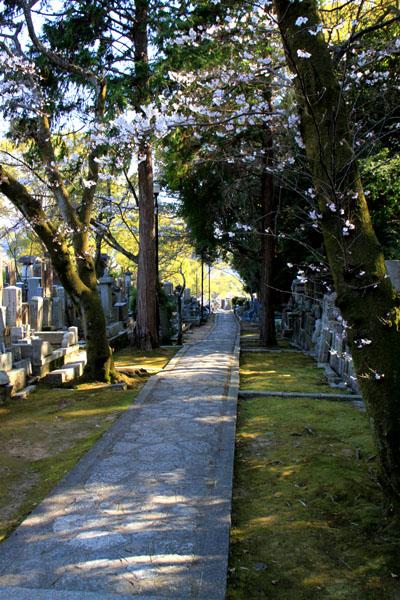 京の花だより 真如堂から・・・_e0048413_20522489.jpg