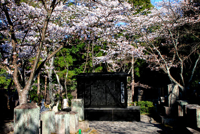 京の花だより 真如堂から・・・_e0048413_20523885.jpg
