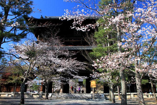 京の花だより 金戒光明寺_e0048413_2283057.jpg