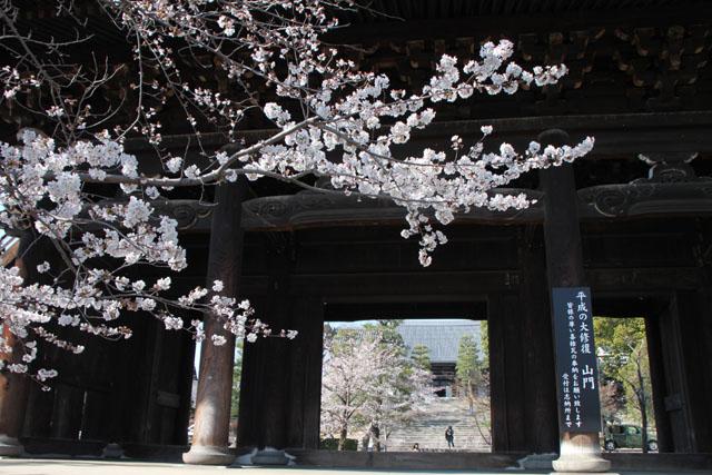 京の花だより 金戒光明寺_e0048413_2285839.jpg