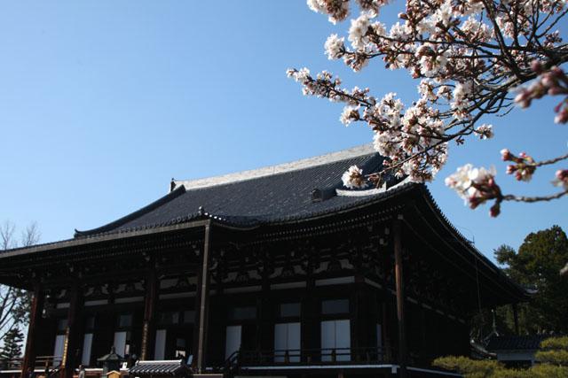 京の花だより 金戒光明寺_e0048413_2292398.jpg