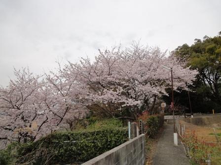 お花見散歩_d0157317_1174127.jpg