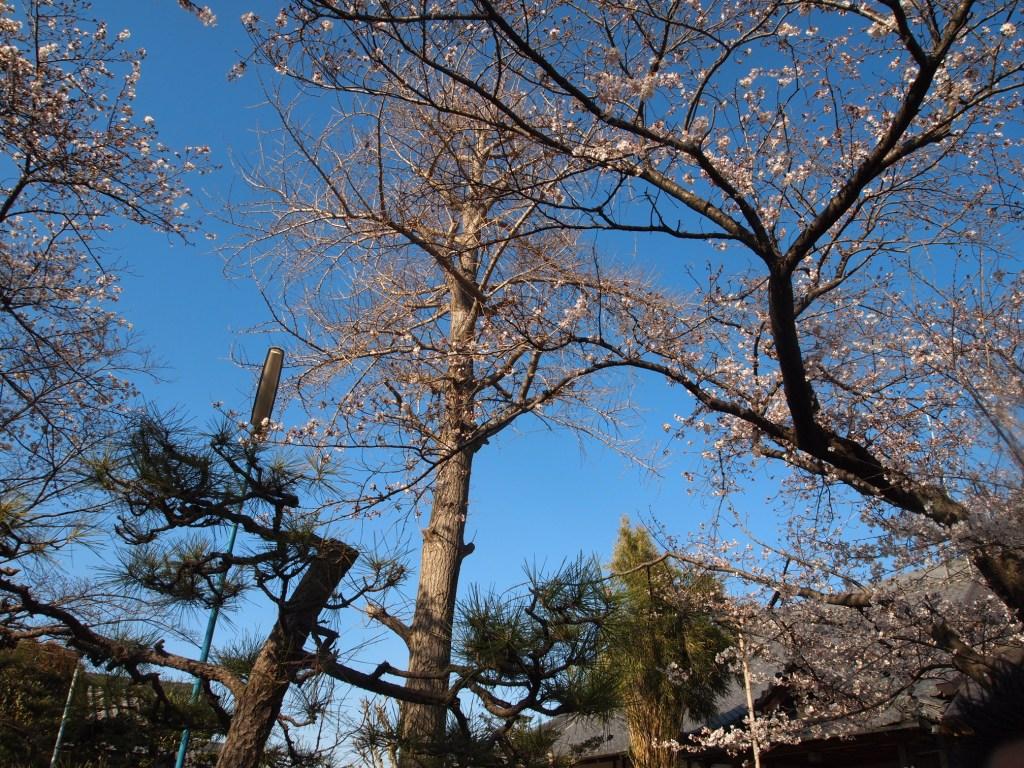 毎年恒例♪ボンヴィラージュ合同花見@泉光寺_b0077531_23285073.jpg