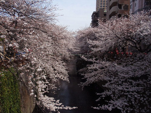 名所「目黒川の桜」。_e0053731_20125735.jpg