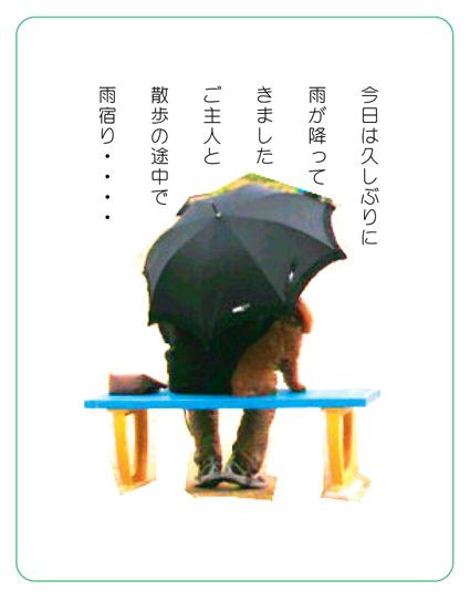 雨の散歩_d0129249_1430794.jpg