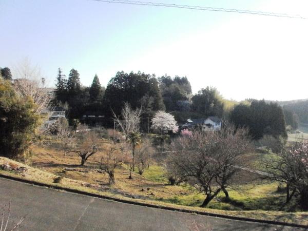 春爛漫_a0174458_2354262.jpg