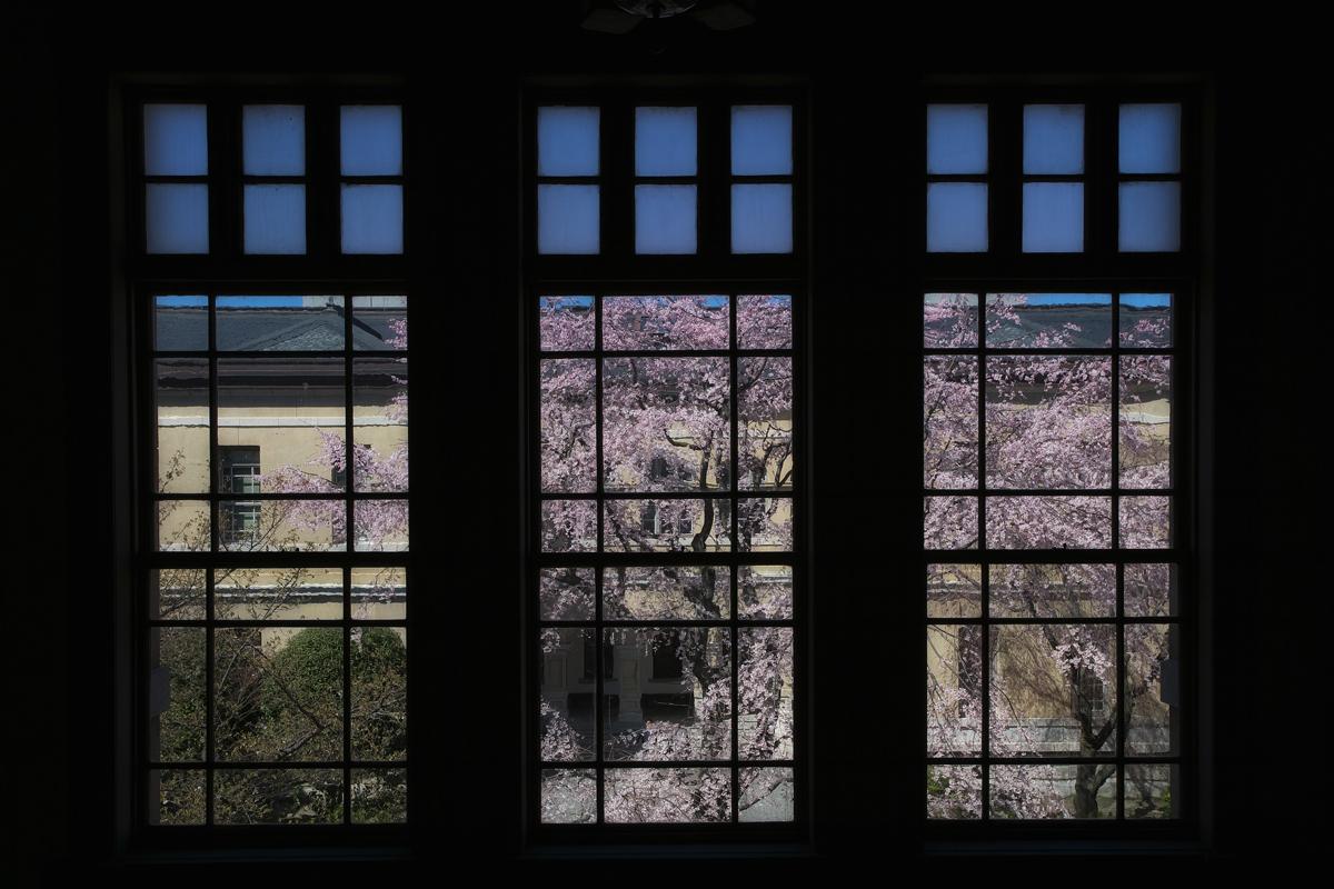 桜 2011 京都 <京都府庁>_f0021869_17303215.jpg