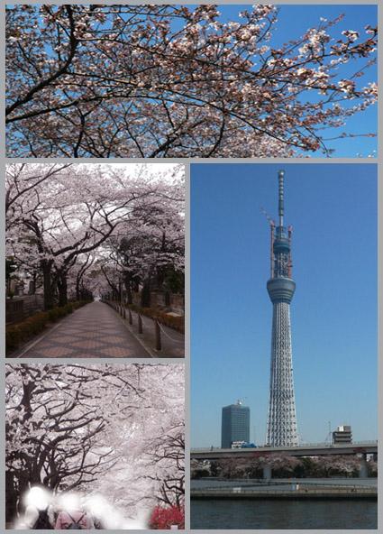 太一、桜街道を行く。静香、花より団子。_e0236072_2259580.jpg