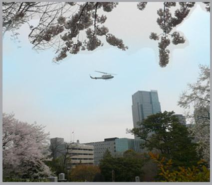 太一、桜街道を行く。静香、花より団子。_e0236072_2324561.jpg