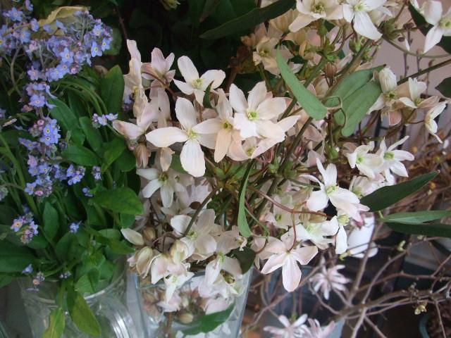 オークリーフ(桜色の花たち)_f0049672_1816696.jpg
