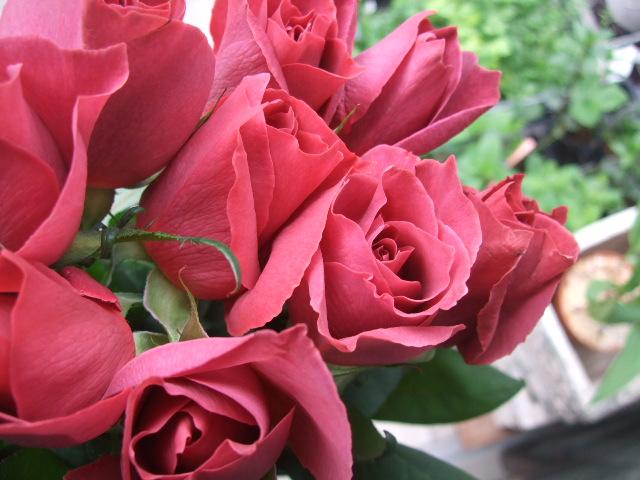 オークリーフ(桜色の花たち)_f0049672_1819294.jpg