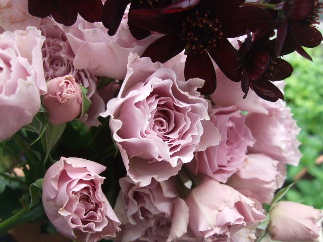 オークリーフ(桜色の花たち)_f0049672_18194781.jpg