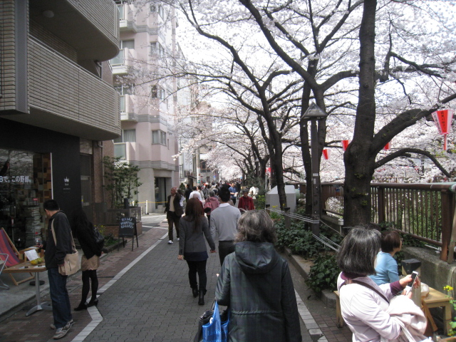 桜_d0228193_115546100.jpg