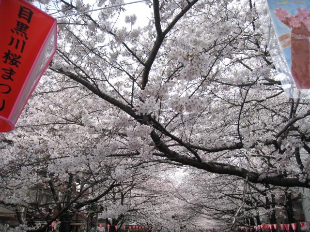 桜_d0228193_11562047.jpg