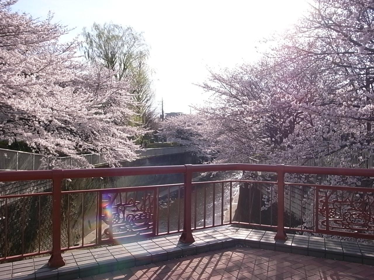 練馬・石神井川の桜_d0122797_1122482.jpg