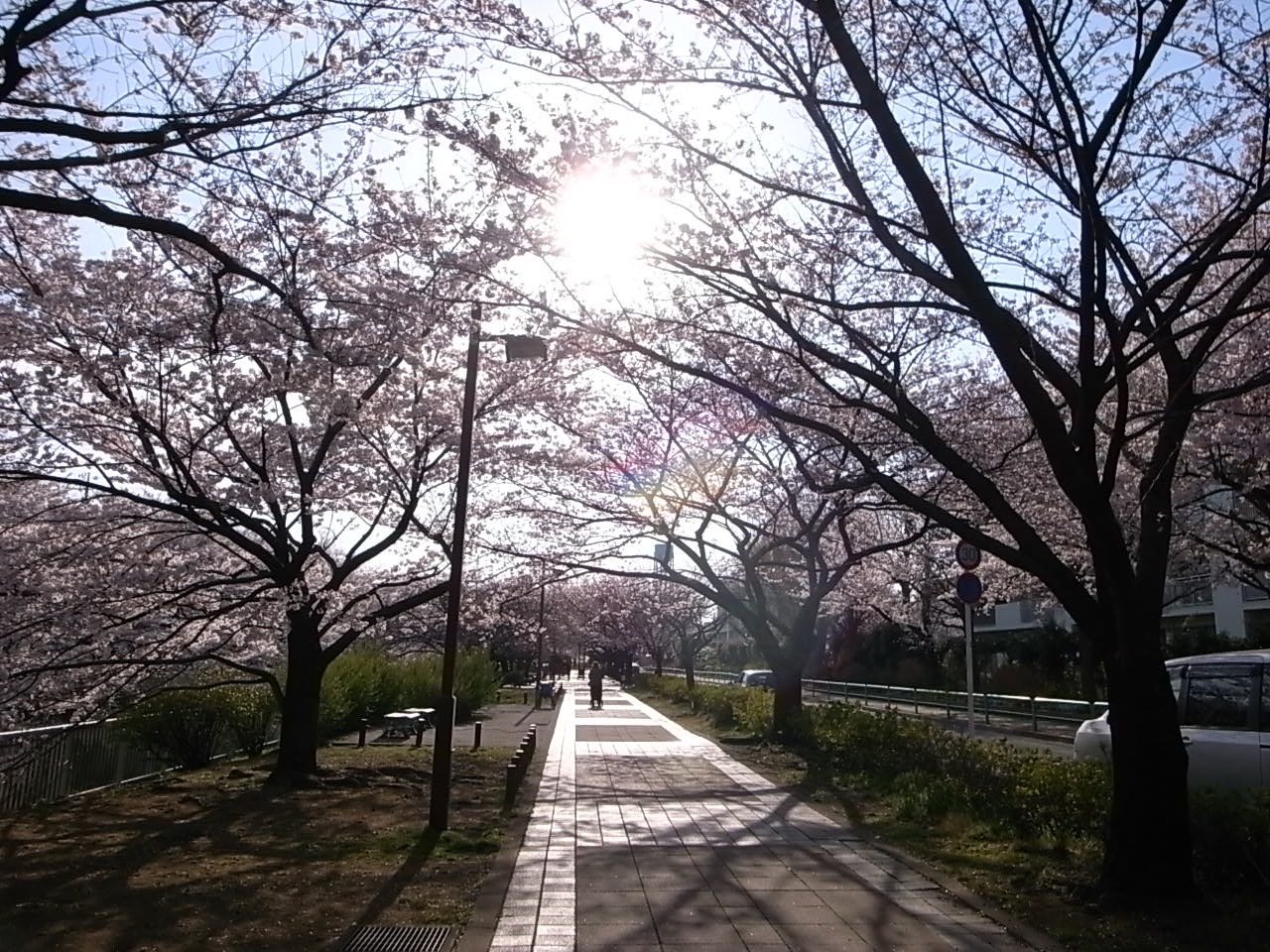 練馬・石神井川の桜_d0122797_113156.jpg