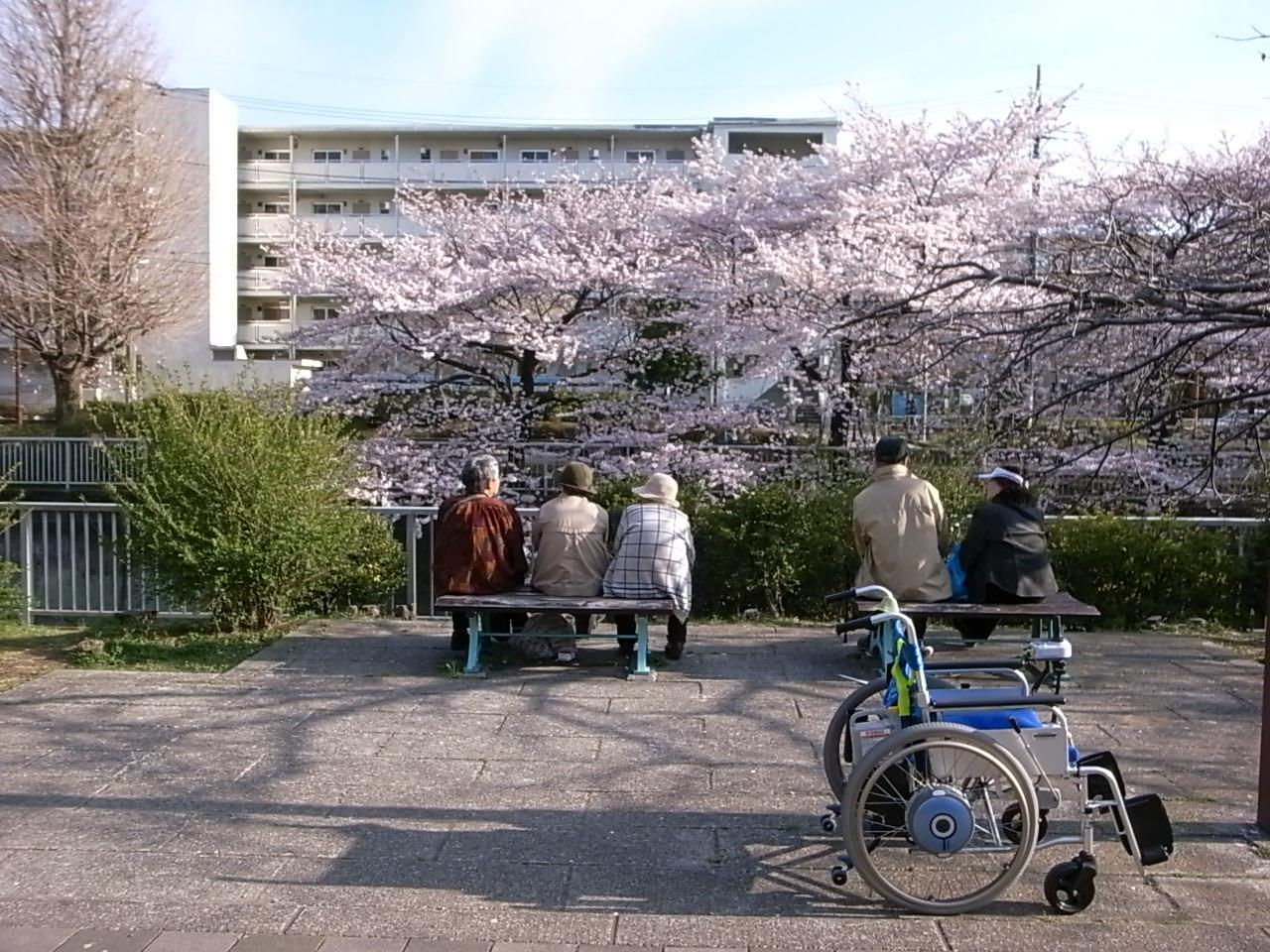 練馬・石神井川の桜_d0122797_1134248.jpg