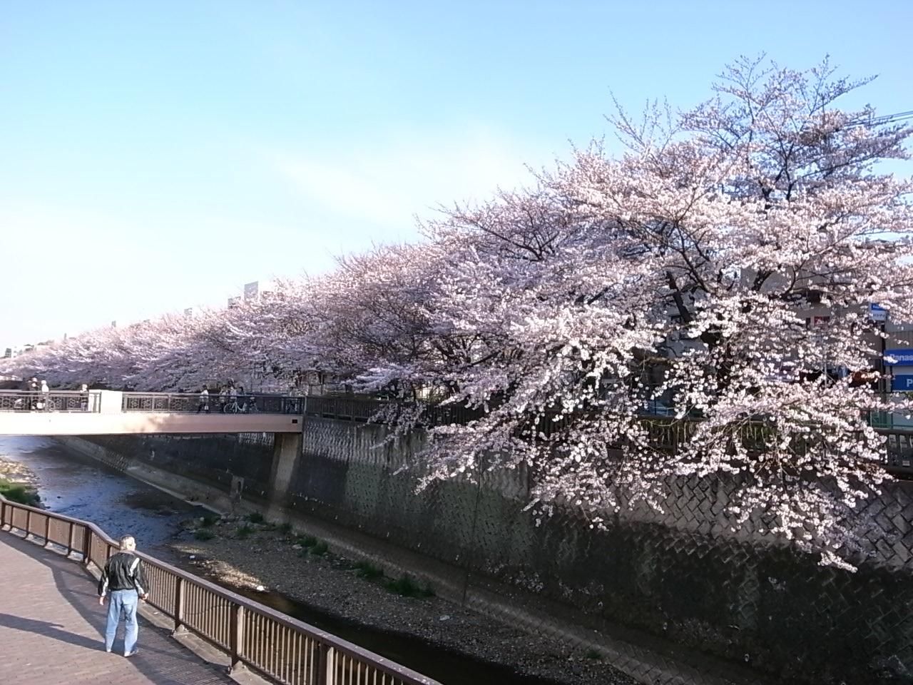 練馬・石神井川の桜_d0122797_1145566.jpg